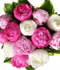 peonies in bouquet