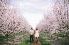 almond blossom engagement shot by Laura Goldenberger