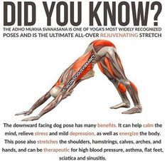 Exercises to Relieve Sciatica and Low Back Pain - Stretching exercises can help reduce sciatic pain. Your sciatic nerve runs through your piriformis, a muscle located deep in your glutes. If the piriformis gets too tight, it can impinge the sciatic nerve, causing pain, tingling, and numbness in your leg.