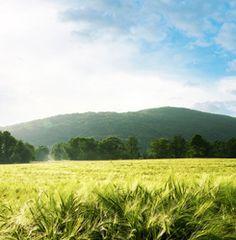 Mountain and cornfield landscape