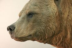 Sculpted grizzly bear face detail for the San Diego Zoo   Blue Rhino Studio