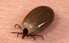 New illness spread by ticks found similar to Lyme disease
