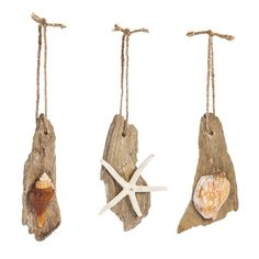 Have a coastal Christmas with this beach themed set of ornaments. The set of 3 driftwood ornaments includes a different shell on each. The ornaments hang ...