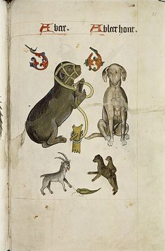The Tudor Pattern Book  / Bear and Bloodhound, Goat, green insect, apes