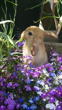 Bunny in a field of flower.