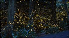 What do you do when your camera can't focus and your subject won't sit still? Photographer Tsuneaki Hiramatsu has the right idea. Using time-lapse photography, he captured the illuminated motions of fireflies.
