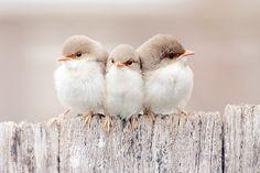 awe Baby Animals, Animals And Pets, Cute Animals, Animals Beautiful, Beautiful Creatures, Beautiful Birds, Cute Birds, Pretty Birds, Small Birds