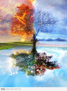 One Tree, Four Seasons.