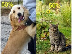 50% DOG 50% CAT! woo! This is very true tho...in maaany ways. I LOVE DOGS, a crap ton more than cats tho..