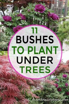 Shade Loving Shrubs: The Best Bushes To Plant Under Trees - Gardening @ From House To Home
