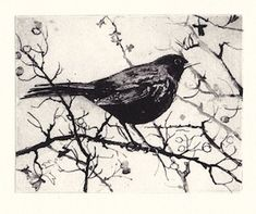 Hawthorn Blackbird Blackbirds, Bird Prints, Etchings, Gates, Printmaking, Feathers, Solar, Tattoo Ideas, Stencil