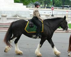 fit and strong, these horses have been counted on through the ages. not only by royal families but also by knights in charge of protecting them!