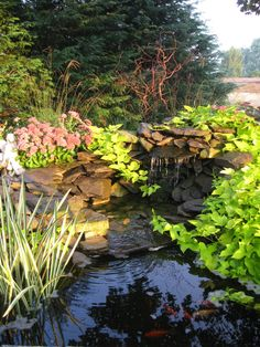 Pond in our back yard.  We built the waterfall a few summers ago.