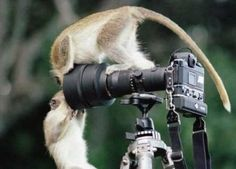 С Днем фотографа!!!