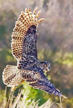 E89 Eagle Owl