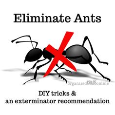 Eliminate Ants with DIY solutions. Seriously. Hate. Ants. H-A-T-E! I will try every single one of these. So glad awesome people shared the tips with us!
