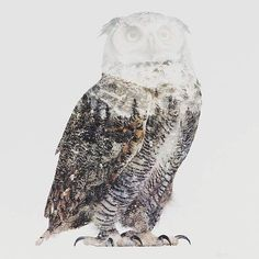 Double Exposure Photos Capture the Essence of Animals in Arctic Landscapes - My Modern Met