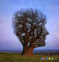 Amazing Tree ~ HD Wallpapers Point