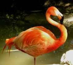 Parker's Barkers: Whooping Cranes, Flamingos and More!
