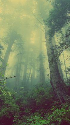 Green Forest Mist Fog #iPhone #6 #wallpaper