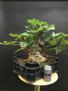 1707 Best Bonsai Penjing Terrarium Plants Images In 2019