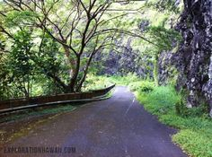Old Pali Rd Trail to Waterfall.  If you take the Pali Hwy, it's rumored to be haunted