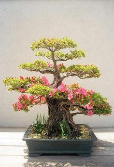 Como pode uma árvore tão pequena ser tão linda?