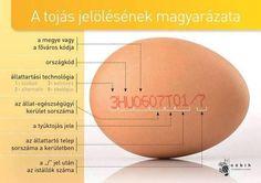 Amit a tojás jelöléséről tudni kell - Nébih Cake Tutorial, Kitchen Hacks, Kitchen Ideas, Happy Life, Healthy Life, Good To Know, Fun Facts, Food And Drink, Nutrition