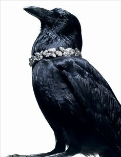 Give me, give me, diamonds galore, quoth the raven nevermore