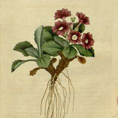 Botanical prints French Painting Digital Image by mapsandposters, $8.88