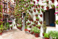 Spring Flowers Decoration of Old House Patio, Cordoba, Spain, Europe Stock Photo - 26588463