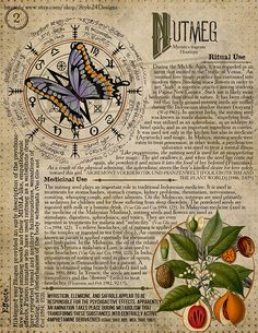 Nutmeg Book of Shadows page, Ritual Poisonous Plants - All the Interesting Information You're Wondering Here Magic Herbs, Herbal Magic, Wiccan Witch, Wiccan Spells, Wicca Herbs, Hogwarts, Witchcraft For Beginners, Poisonous Plants, 12th Book