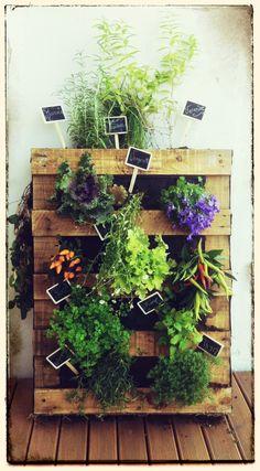 Mur végétal réalisé avec une palette en bois  Herbes aromatiques et plantes vivaces Étiquette ardoise  Déco de notre balcon prise au premier jour de plantation