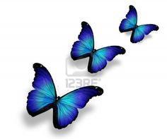 blue White Butterfly Tattoo, Butterfly Quotes, Butterfly Drawing, Butterfly Tattoo Designs, Butterfly Painting, Blue Butterfly, Black Background Images, Black Backgrounds, Family Name Tattoos