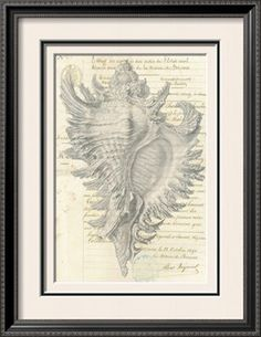 Malacology II Art Print by Stephanie Monahan at Art.com