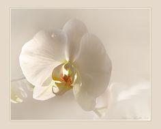 ❀ white