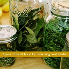 Expert Tips and Tricks for Preserving Fresh Herbs