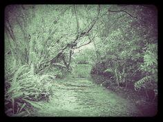 GreyWater Watch Lands © Antonio Carlos Teixeira 2014 #ASongOfIceAndFire in #AtlanticForest from #RioDeJaneiro #rio_de_janeiro #atlantic_forest #a_song_of_ice_and_fire #natureza #natureza_brasileira #nature #brazilian_nature #art_digital #digital_art #art #arte_digital #arte #arte_alternativa #alternative_art #brazilian_art #fotografia_digital_brasileira #brazilian_art_photo elfwood@nym.hush.com