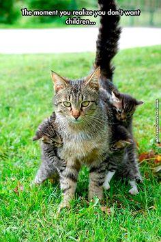 Regret | Fun Cat Pictures