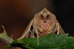 agaatvlinder, vlinder met vacht http://vroegevogels.vara.nl/Foto.462.0.html?&tx_varavvgallery_pi1[uid]=199268&cHash=6a134a144ad43fcd72fd33bd4febd06c