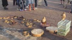 Djemaa el Fna - snake charmers at main square of Marrakech Morocco