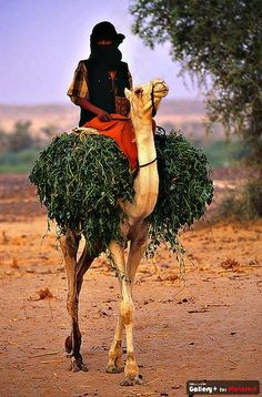 niger comming home Love You All, How Are You Feeling, Desert Places, We Are The World, Good Heart, Camels, Mothers Love, Animal Rescue, Beautiful People