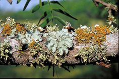 The Ancient World of the Colourful and Enduring Lichens