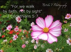 2 Corinthians. HolyBible. NatalieVPhotography. Bible Verses of Encouragement. Find my page on Facebook. Encouraging Bible Verses, Encouragement, Faith, Facebook, Believe