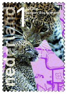 100 jaar Burgers' Zoo  Sri Lankapanter       http://collectclub.postnl.nl/pages/detail/s1/10220000001790-2-21010000000080.aspx