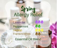 If the pollen count has you feeling miserable try these essential oils for seasonal allergy relief.Used in a diffuser applied topically with a carrier oil - these hard-working but easy-to-find essential oils can make allergy season more comfortable. Essential Oils Allergies, Essential Oils For Colds, Essential Oil Diffuser Blends, Young Living Essential Oils, Essential Oils To Sleep, Young Living Oils For Allergies, Essential Oil Cold Remedy, Essential Oils Energy, Stress Relief Essential Oils