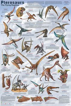 """Same Artist as """"Dapper Dinosaurs."""" Note that Pterosaurs and Dinosaurs were two totally Different classes of Reptiles. (Although, one group of the Latter did become our Birds of today.)"""