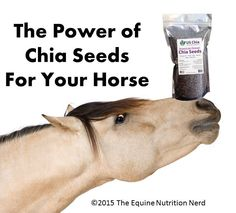 """I sort of forgot one of my favorite topics in the """"C""""s so I am going back just to add this post about Chia seeds. Then on ward to the """"E""""s !! Most horse owners understand that fresh grass is the be..."""