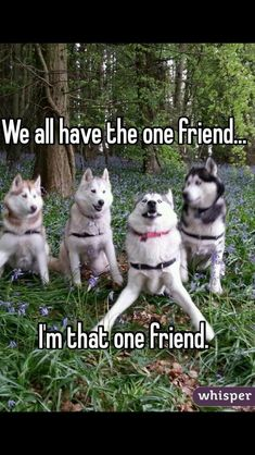 30 Funny Animal Pictures and Memes You Wont Stop Laughing At - Funny Animal Quotes - - 30 Funny Animal Pictures and Memes You Won't Stop Laughing At The post 30 Funny Animal Pictures and Memes You Wont Stop Laughing At appeared first on Gag Dad. Funny Animal Jokes, Funny Dog Memes, Cute Funny Animals, Funny Dogs, Funny Husky, Fun Funny, Husky Meme, Funny Puppies, Funny Captions