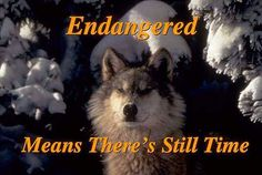 Wolf Please do not kill us, we have every right to be here on Mother Earth.